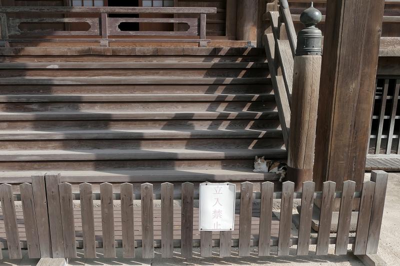 お堂裏の階段と三毛猫1