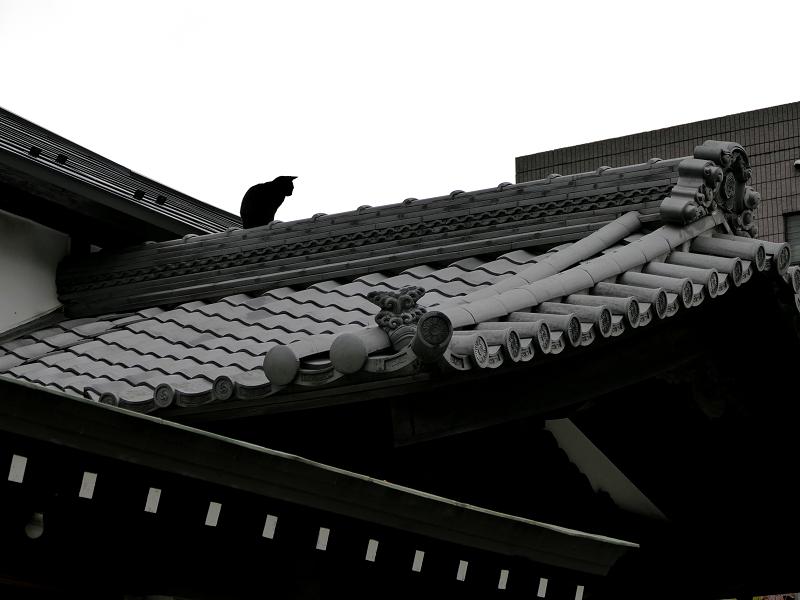神社屋根上の黒猫2