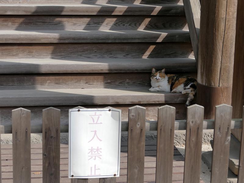 お堂裏の階段と三毛猫2