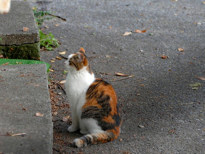 緊張感が消えない三毛猫
