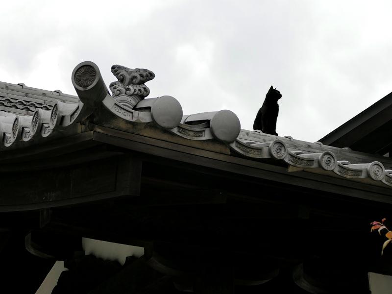 神社屋根上の黒猫3