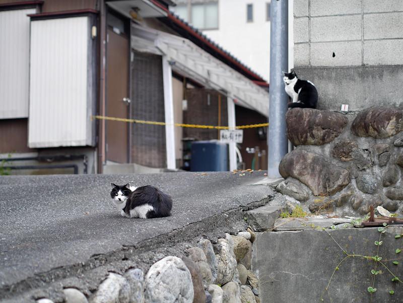 私有地前の猫たち1