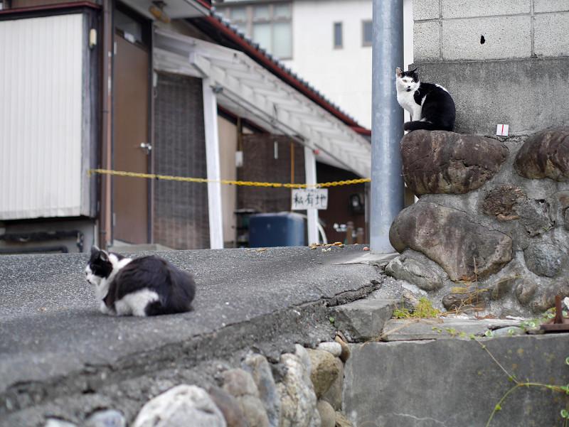 私有地前の猫たち2