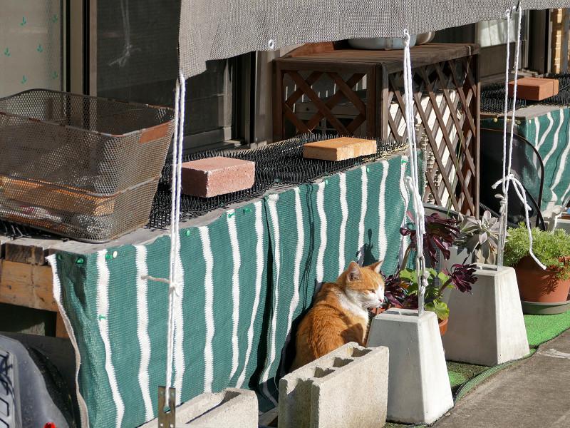 民家庭の茶トラ猫2