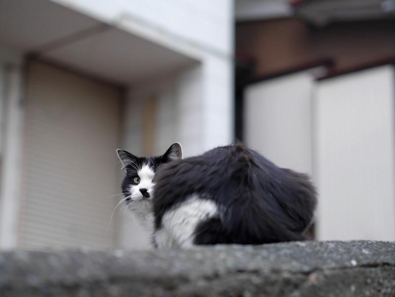 私有地前の猫たち5