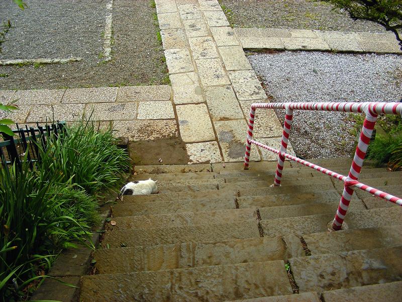 境内に降りる猫