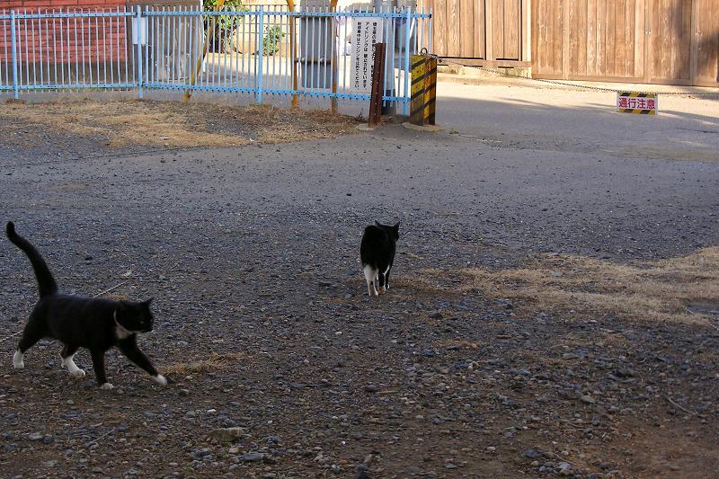 空き地と黒白猫1