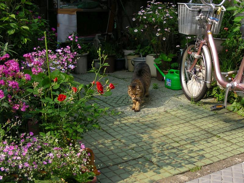花壇から出てきた猫1