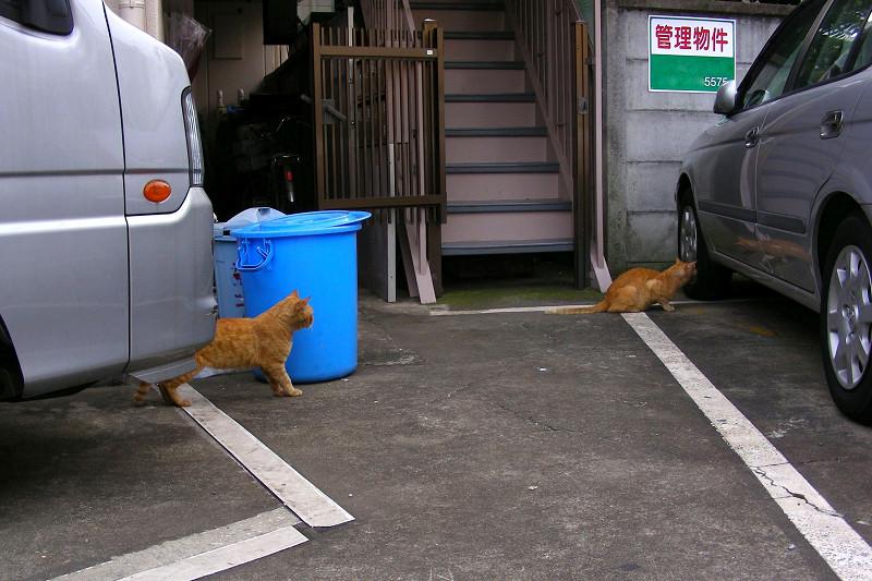 出てきた茶トラ猫たち1
