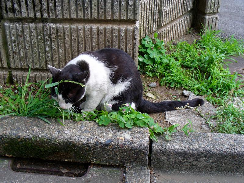 ブロック角っこの黒白猫1