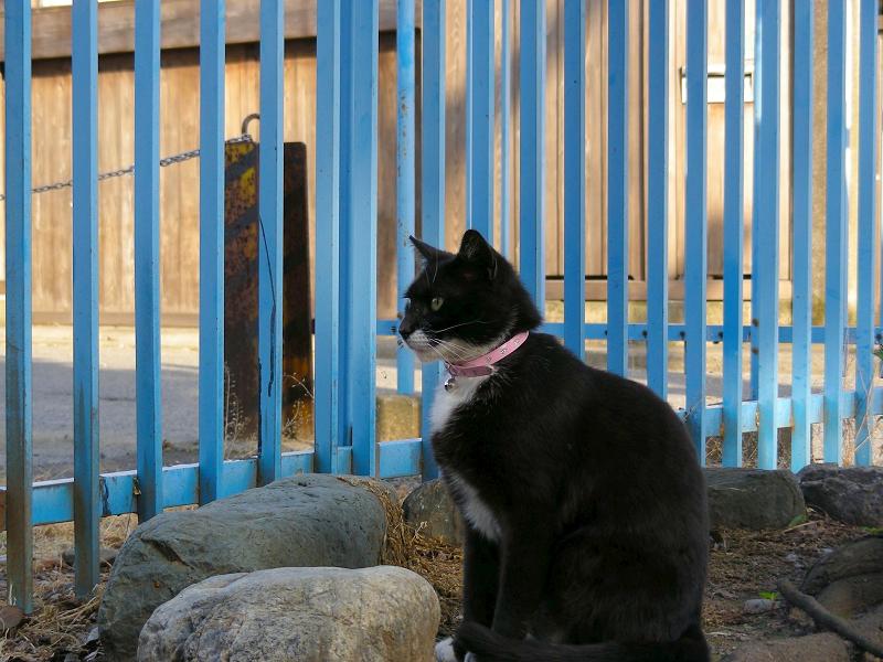 空き地と黒白猫2