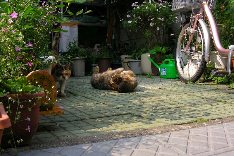 花壇から出てきた猫2