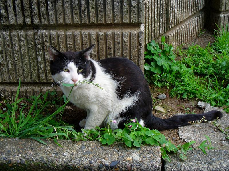 ブロック角っこの黒白猫2