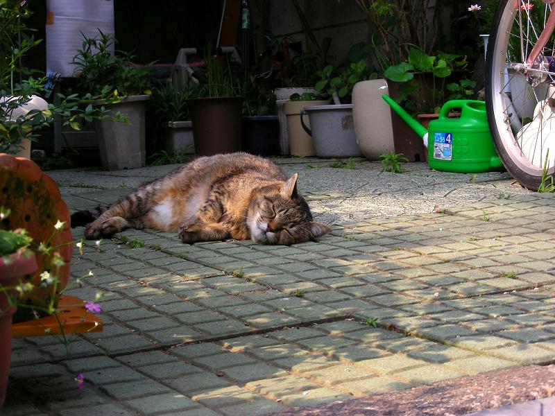 花壇から出てきた猫3