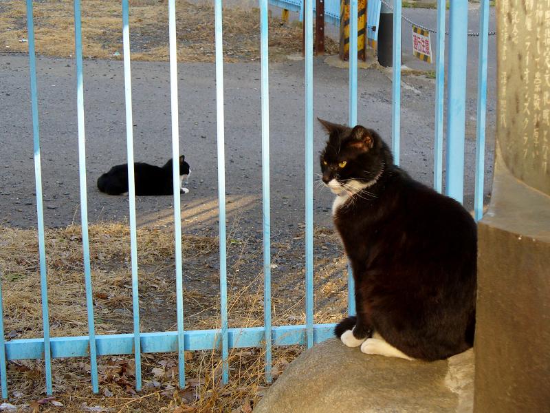 空き地と黒白猫3