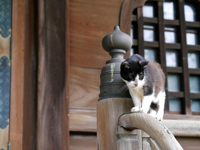 お堂階段手すりで技をみせる黒白猫1
