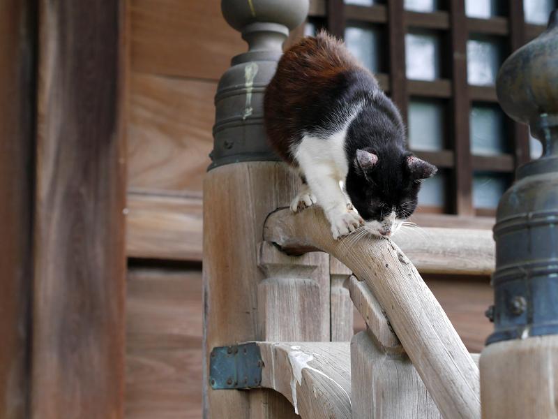 お堂階段手すりで技をみせる黒白猫2