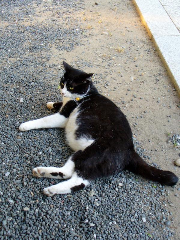 境内で横になってる黒白猫1