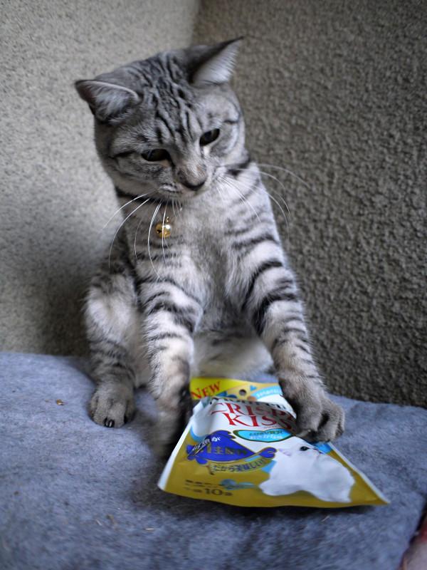 キャットフードで遊ぶサバトラ猫2