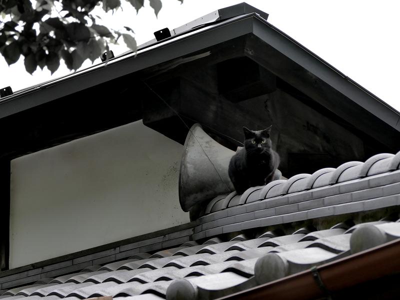神社屋根瓦と黒猫1