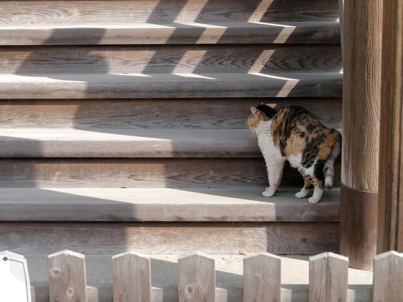 お堂裏側の階段で伸びをする三毛猫1