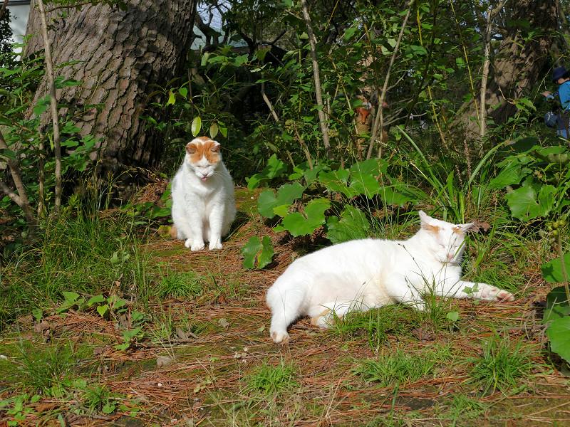 日向の猫たち1