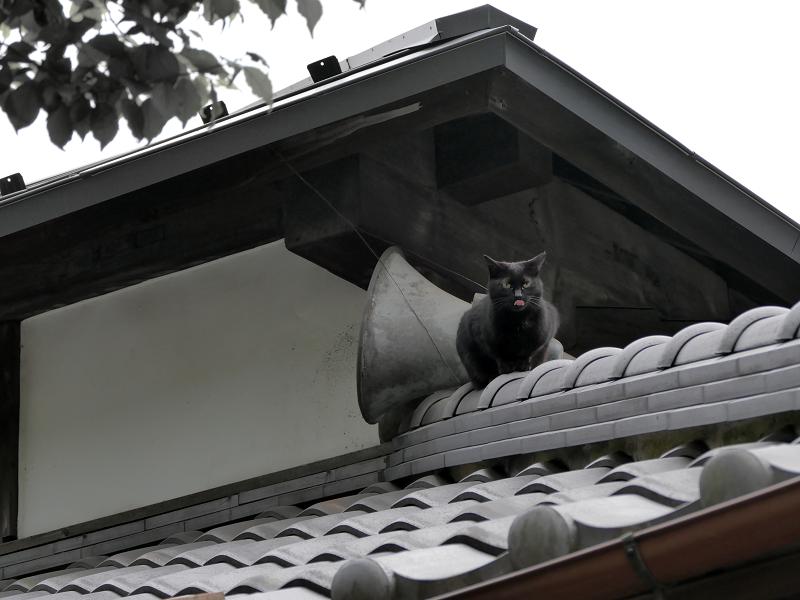 神社屋根瓦と黒猫2