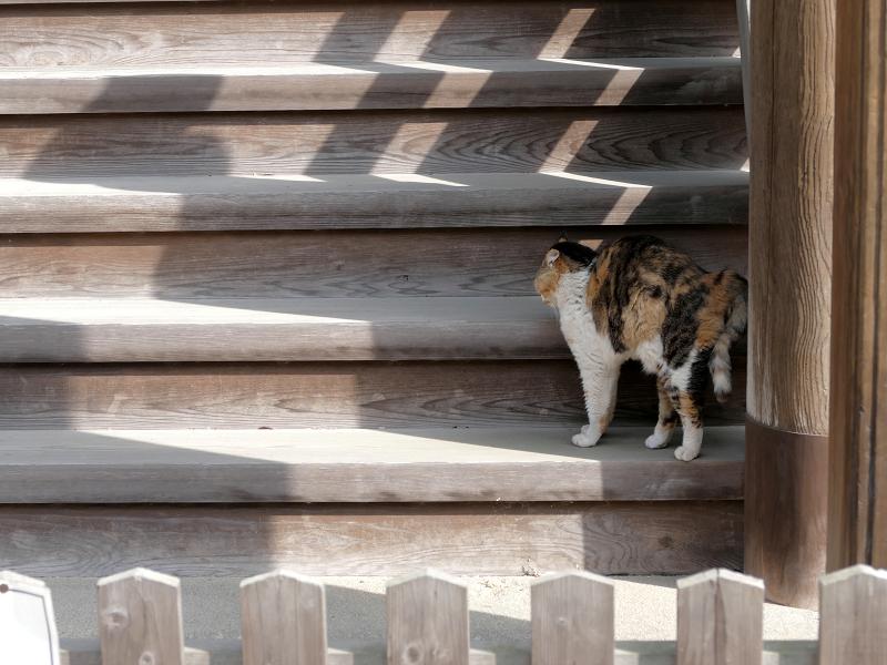 お堂裏側の階段で伸びをする三毛猫2