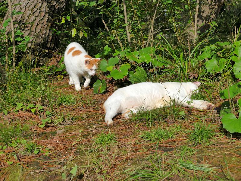 日向の猫たち2