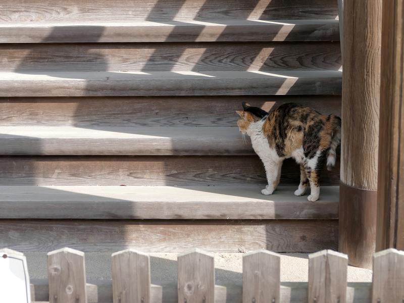 お堂裏側の階段で伸びをする三毛猫3