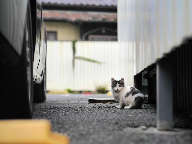 ローアングルの駐車場の仔猫