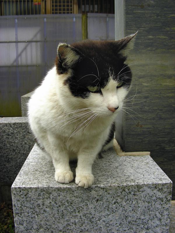 御影石と黒白猫1