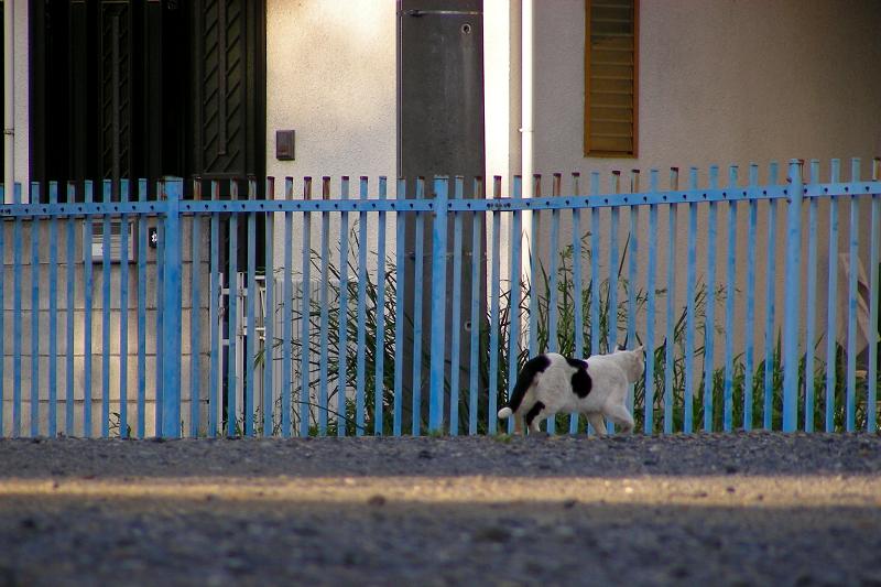 空き地を歩く白黒猫