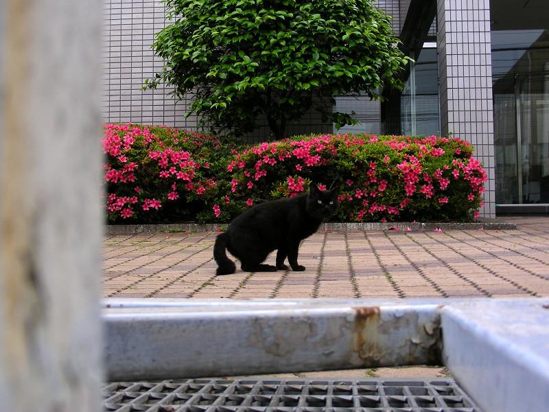 敷地内の黒猫2