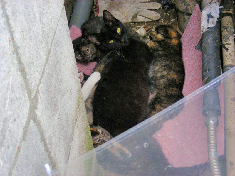 ビルの間の親子猫2