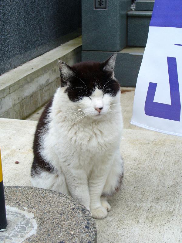 御影石と黒白猫2