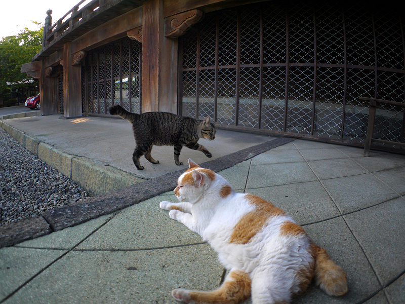 お堂犬走りの猫たち1