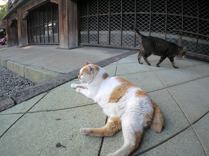 お堂犬走りの猫たち2
