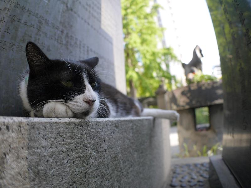 石碑でのんびりな黒白猫1