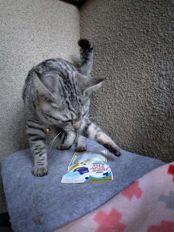 キャットフードで遊びまくるサバトラ猫1
