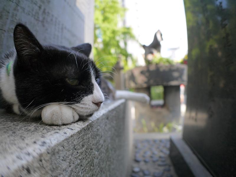 石碑でのんびりな黒白猫2