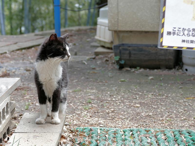 帰って来た黒白猫1