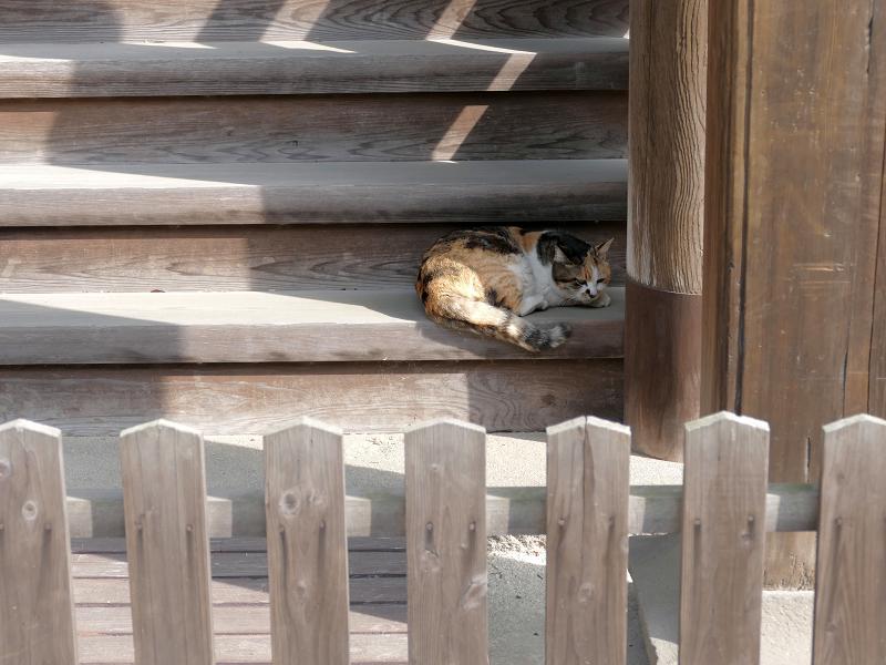 階段で寝ようとしている三毛猫1