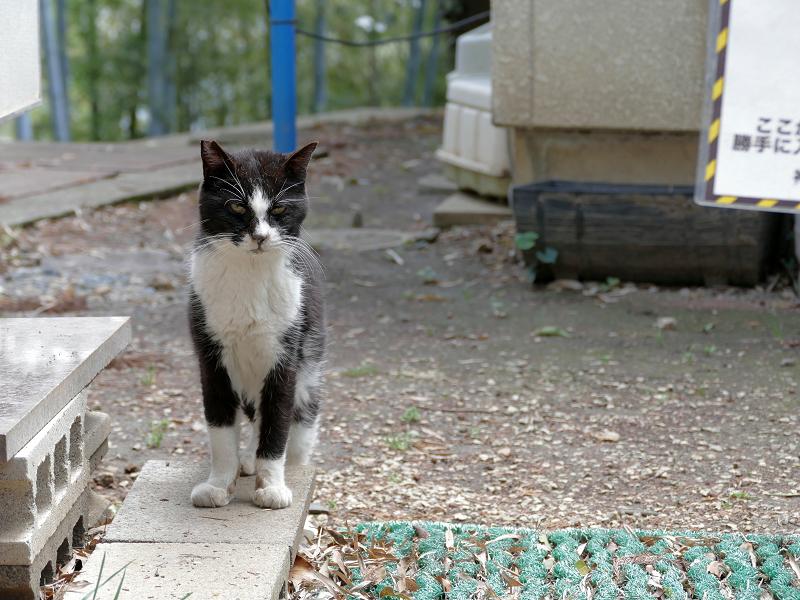 帰って来た黒白猫2
