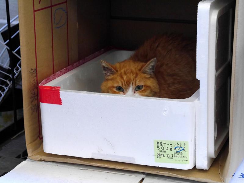 ハウスに入ってる茶トラ猫1