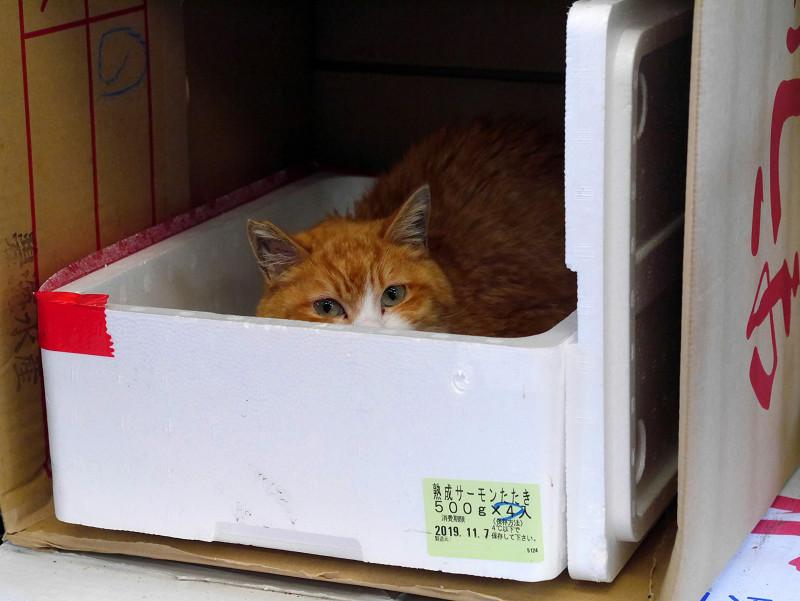 ハウスに入ってる茶トラ猫2