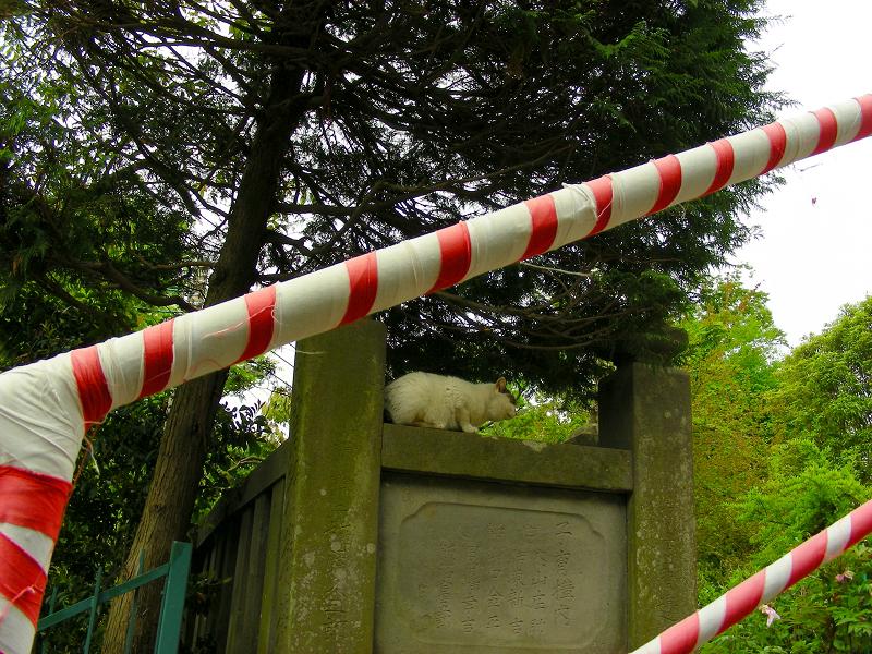 階段を登った白キジ猫1