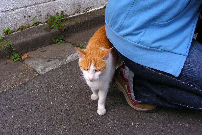路地の茶白猫1