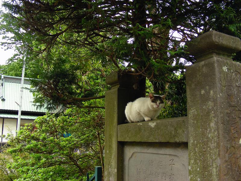 階段を登った白キジ猫2