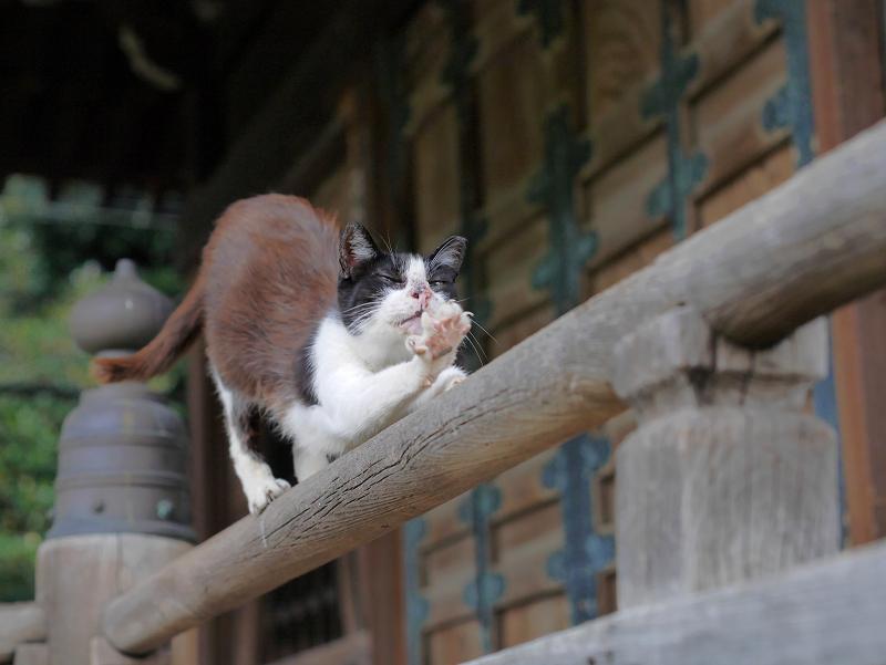 欄干上の黒白猫2